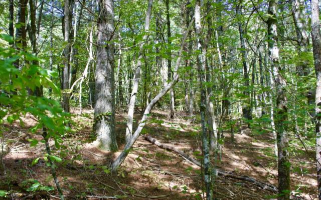 LOT12 Deer Trails, Blue Ridge, GA 30513 (MLS #271921) :: RE/MAX Town & Country
