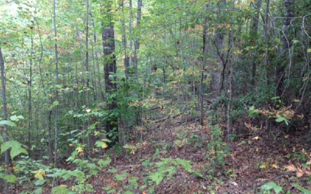 Holly Hill Lane, Hayesville, NC 28904 (MLS #272056) :: RE/MAX Town & Country