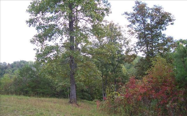 Walnut Trace, Mineral Bluff, GA 30559 (MLS #273662) :: RE/MAX Town & Country