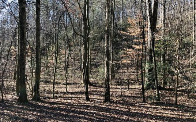 LOT31 Hidden Hills, Ellijay, GA 30540 (MLS #274164) :: RE/MAX Town & Country