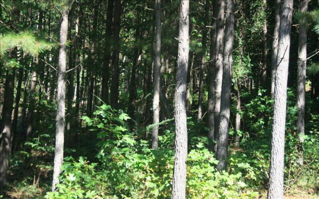LT 32 Black Bear Ridge, Ellijay, GA 30540 (MLS #274187) :: RE/MAX Town & Country