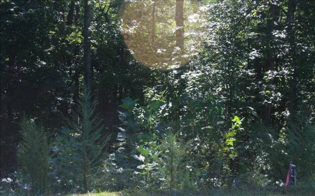 LT 39 Black Bear Ridge, Ellijay, GA 30540 (MLS #274189) :: RE/MAX Town & Country