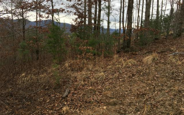 LT 42 Hills At Queens Gap, Blairsville, GA 30512 (MLS #274364) :: RE/MAX Town & Country