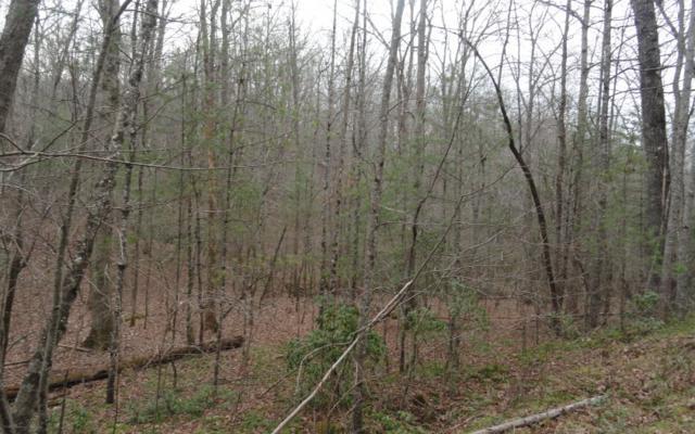 LT 17 Gray Fox Trail, Blairsville, GA 30512 (MLS #275573) :: RE/MAX Town & Country