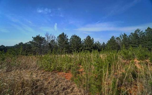 LT 27 Reece Mountain, Ph 1, Ellijay, GA 30540 (MLS #275848) :: RE/MAX Town & Country