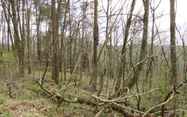 20 Whisenant Mountain, Ellijay, GA 30540 (MLS #276076) :: Path & Post Real Estate
