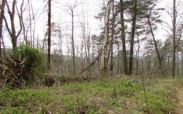 38 Whisenant Mountain, Ellijay, GA 30540 (MLS #276078) :: Path & Post Real Estate