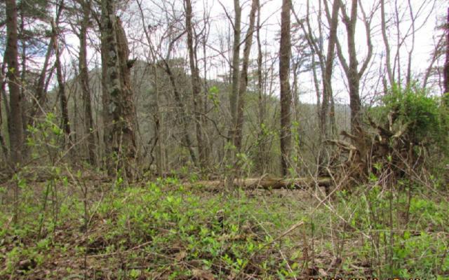 16 Whisenant Mountain R, Ellijay, GA 30540 (MLS #276081) :: Path & Post Real Estate