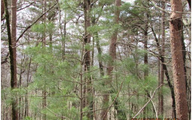 26 Firetower, Jasper, GA 30143 (MLS #276184) :: Path & Post Real Estate