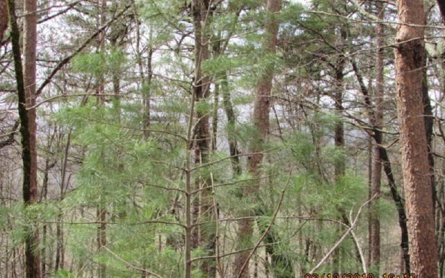 40 Firetower, Jasper, GA 30143 (MLS #276189) :: Path & Post Real Estate