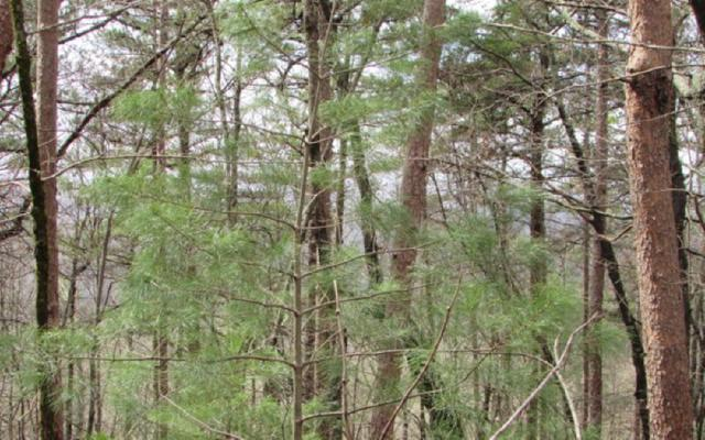 3 Firetower, Jasper, GA 30143 (MLS #276231) :: RE/MAX Town & Country