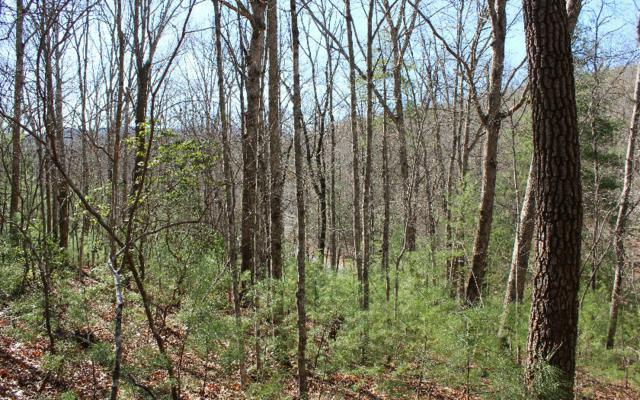 LOT 1 Hillbilly Holler, Blue Ridge, GA 30513 (MLS #277352) :: RE/MAX Town & Country