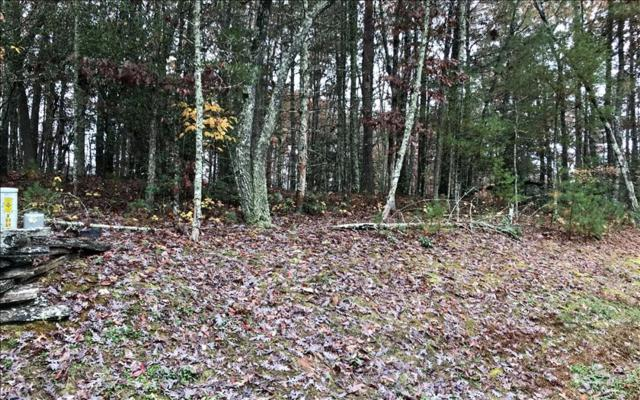 LT15 My Forest Trail, Morganton, GA 30560 (MLS #277690) :: RE/MAX Town & Country