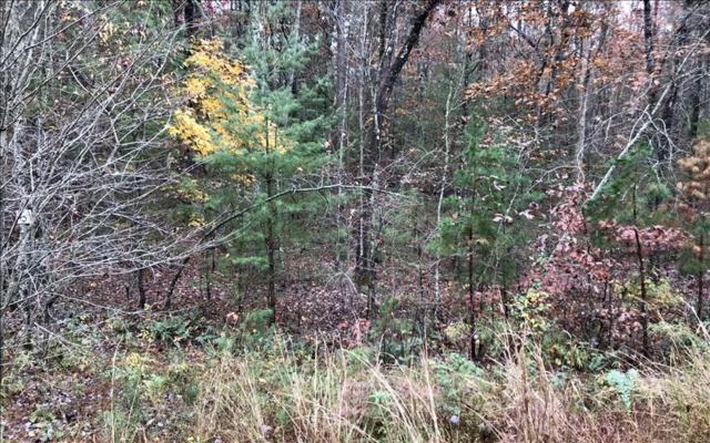 LOT 4 Morning Dew Hollow, Morganton, GA 30560 (MLS #277693) :: RE/MAX Town & Country