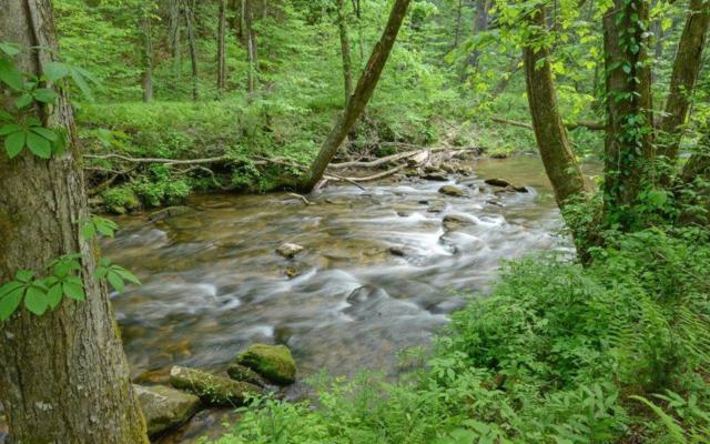 3542 Big Creek Rd, Cherry Log, GA 30522 (MLS #278103) :: RE/MAX Town & Country