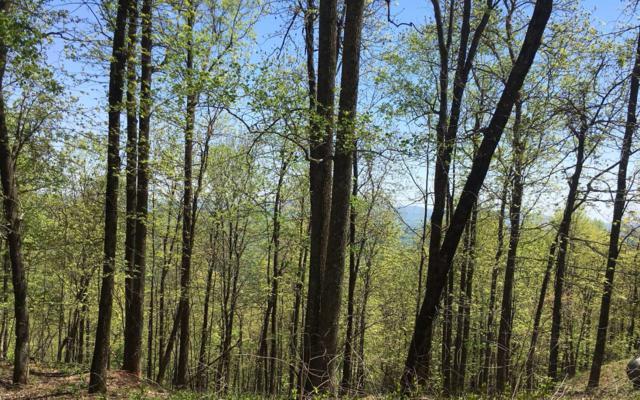 M148 Walnut Ridge, Ellijay, GA 30536 (MLS #278165) :: RE/MAX Town & Country