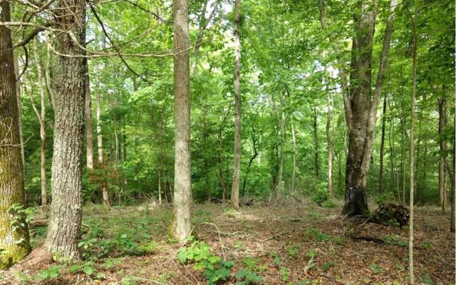 LT26 Self Mountain Road, Blairsville, GA 30512 (MLS #278201) :: RE/MAX Town & Country