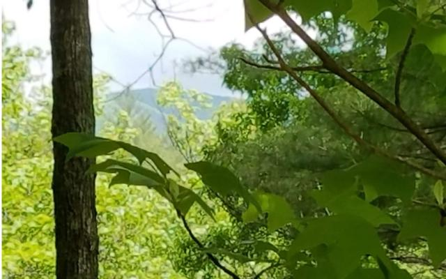 83 Bear Cove, Hayesville, NC 28904 (MLS #278523) :: RE/MAX Town & Country