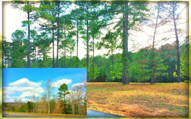 LT 62 The Sanctuary, Blairsville, GA 30512 (MLS #278598) :: RE/MAX Town & Country