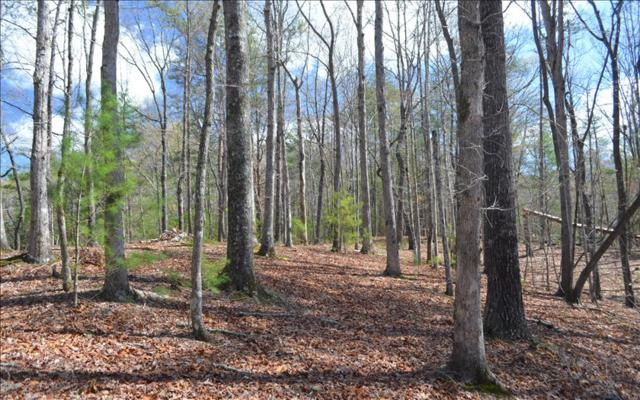 Chicasaw Dr, Ellijay, GA 30540 (MLS #278851) :: RE/MAX Town & Country