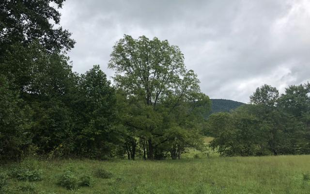 937 Billy Lane, Hiawassee, GA 30546 (MLS #282283) :: Path & Post Real Estate