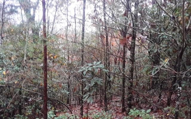 LOT D Tom Tom Trail, Blue Ridge, GA 30513 (MLS #283530) :: RE/MAX Town & Country