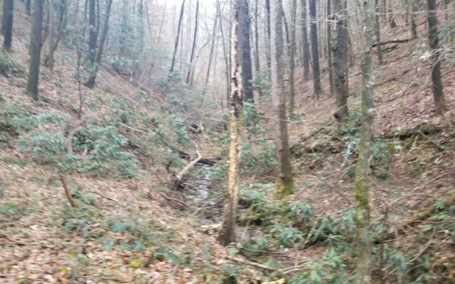Bear Creek Camp Road, Ellijay, GA 30540 (MLS #284796) :: RE/MAX Town & Country