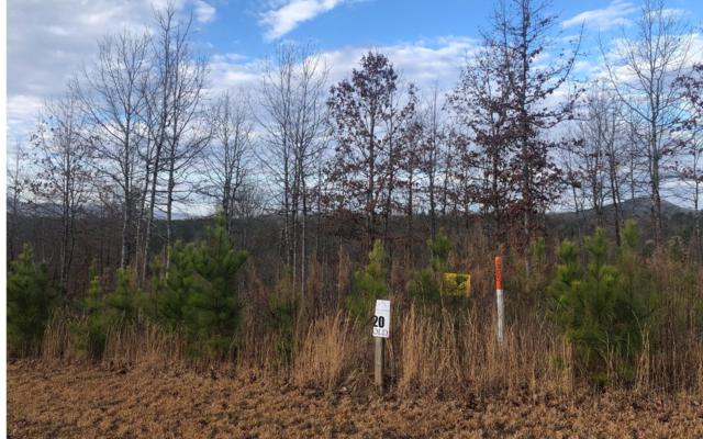 20 Northshore, Blairsville, GA 30512 (MLS #285765) :: RE/MAX Town & Country