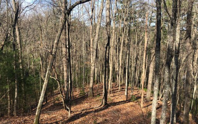46 Nature's Courtyard, Mineral Bluff, GA 30559 (MLS #286442) :: RE/MAX Town & Country