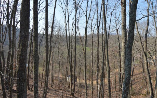 LT 13 Deer Valley, Warne, NC 28909 (MLS #286597) :: Path & Post Real Estate