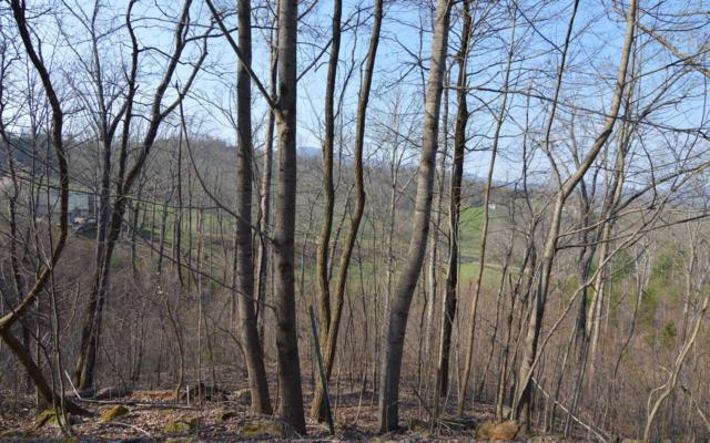 LT 16 Deer Valley, Warne, NC 28909 (MLS #286602) :: Path & Post Real Estate