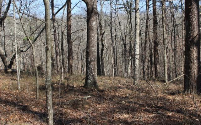 Hanna Dr - Lot 1472, Ranger, GA 30734 (MLS #286668) :: RE/MAX Town & Country