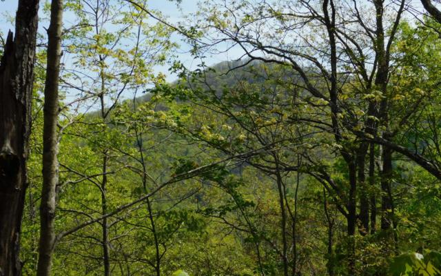 LT 24 Panther Trace, Brasstown, NC 28902 (MLS #287761) :: Path & Post Real Estate
