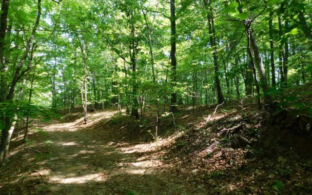 LOT 8 Royal Oaks Trail, Hayesville, NC 28902 (MLS #288591) :: RE/MAX Town & Country