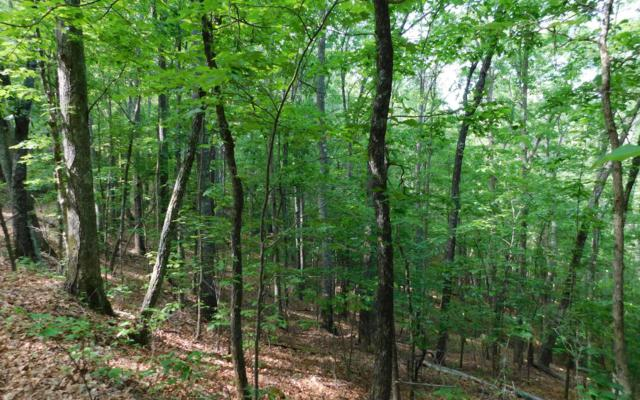 LOT 9 Royal Oaks, Hayesville, NC 28902 (MLS #288592) :: RE/MAX Town & Country