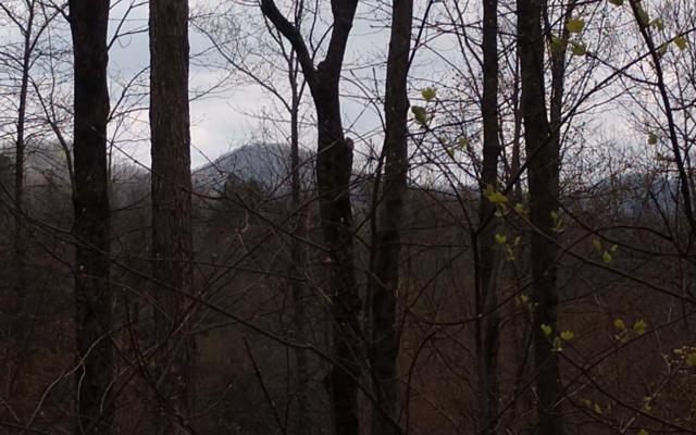 LOT 3 Wilderness Way, Ellijay, GA 30536 (MLS #288728) :: RE/MAX Town & Country