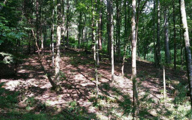 L493 Chicasaw Drive, Ellijay, GA 30540 (MLS #288825) :: RE/MAX Town & Country