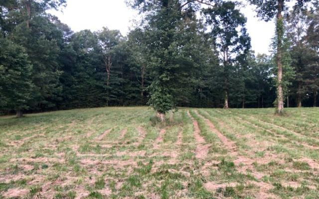 LOT20 Pleasant Meadows, Blairsville, GA 30512 (MLS #290591) :: Path & Post Real Estate