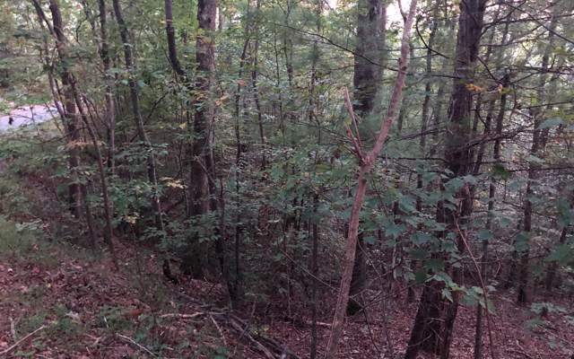 0 Cold Stream, Ellijay, GA 30540 (MLS #292860) :: RE/MAX Town & Country