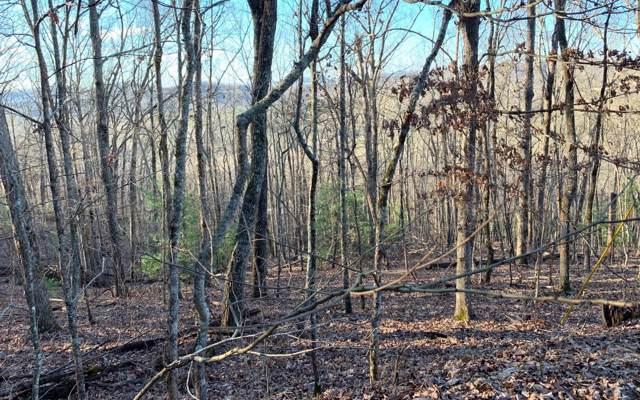 LOT 1 Birchwood Trails, Blairsville, GA 30512 (MLS #294894) :: Path & Post Real Estate
