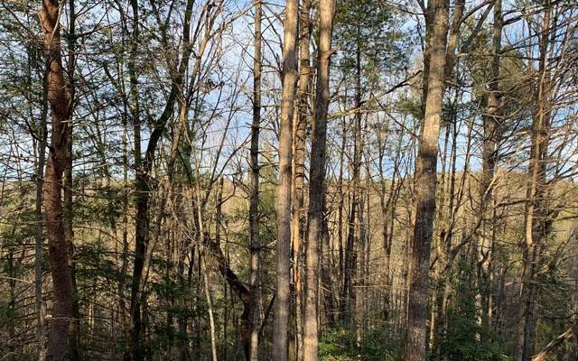 Lot 346 Ocee Court, Ellijay, GA 30540 (MLS #295149) :: RE/MAX Town & Country