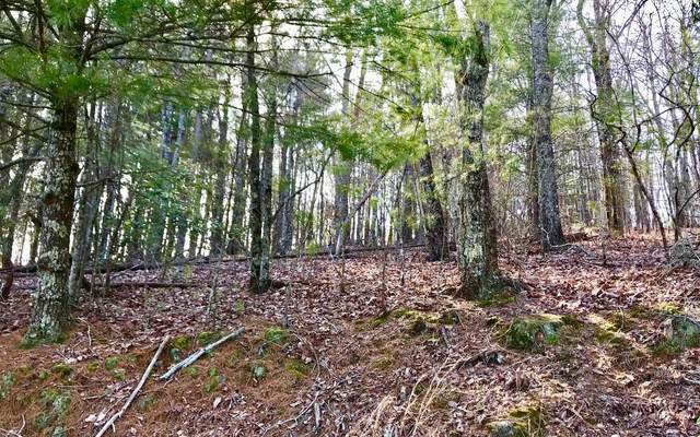 LOT4 Squirrel Hunting Rd, Ellijay, GA 30536 (MLS #295422) :: RE/MAX Town & Country