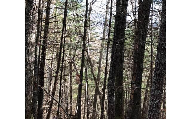 LT 15 Bunny Trail, Blairsville, GA 30512 (MLS #296326) :: Path & Post Real Estate