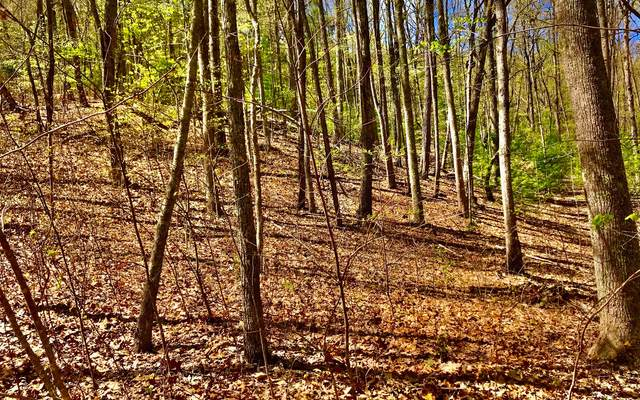 LOT11 Pinnacle Point, Blairsville, GA 30512 (MLS #296657) :: RE/MAX Town & Country