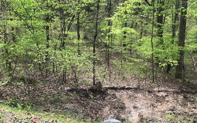LOT 1 Lord's View, Mineral Bluff, GA 30559 (MLS #296748) :: RE/MAX Town & Country