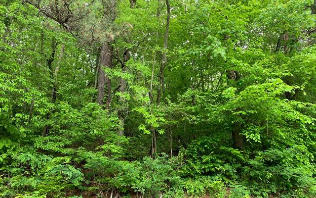 10 AC East Vineyard Road, Hayesville, NC 28904 (MLS #297345) :: RE/MAX Town & Country