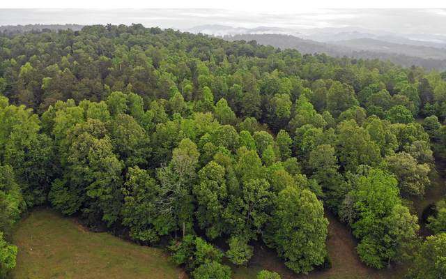 239 Double Springs Spur, Blairsville, GA 30512 (MLS #297484) :: RE/MAX Town & Country