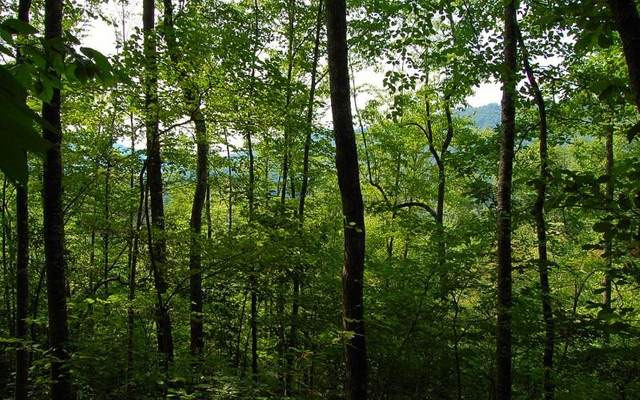 000 Qualla Road, Hayesville, NC 28904 (MLS #298806) :: RE/MAX Town & Country
