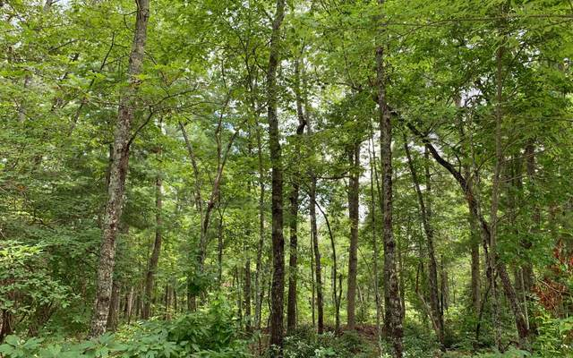 LT 59 Bear Cove, Hayesville, NC 28904 (MLS #299238) :: Path & Post Real Estate