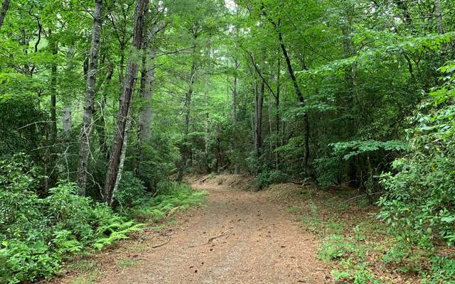 LT7A Caesars Cove, Hayesville, NC 28904 (MLS #299274) :: RE/MAX Town & Country